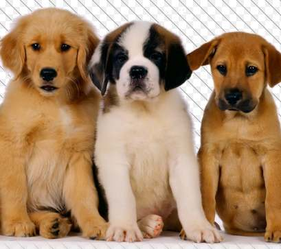 3 perros en adopción