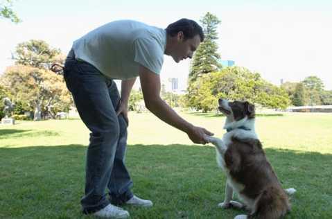 tecnicas y razones para adistrar un perro