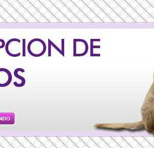 cartel para adoptar perros de la calle