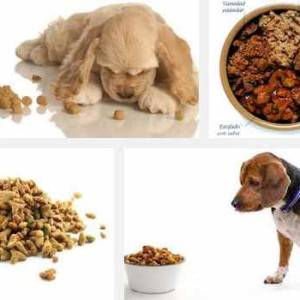mejores alimentos caninos