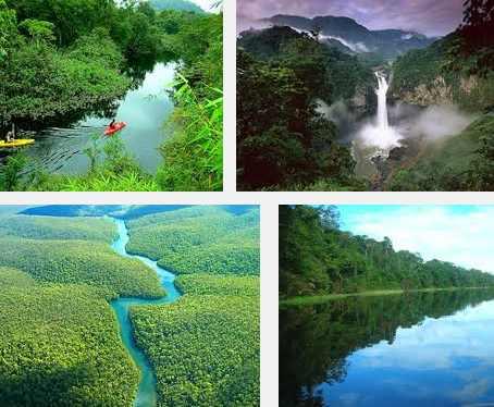 imagenes de la selva amazónica