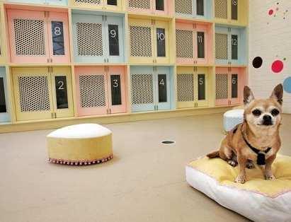 decorado dormitorio para perros y mascotas