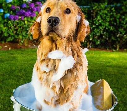 perro bañandose con shampoo