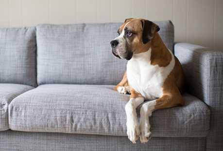 es conveniente tener perro en la casa