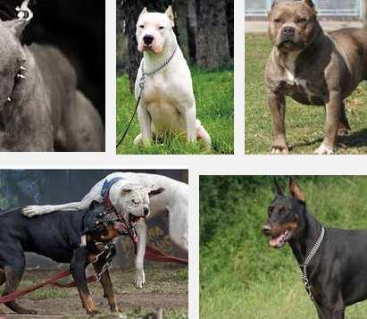 tipos de perros peligrosos
