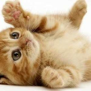 nombres prohibidos para gatos