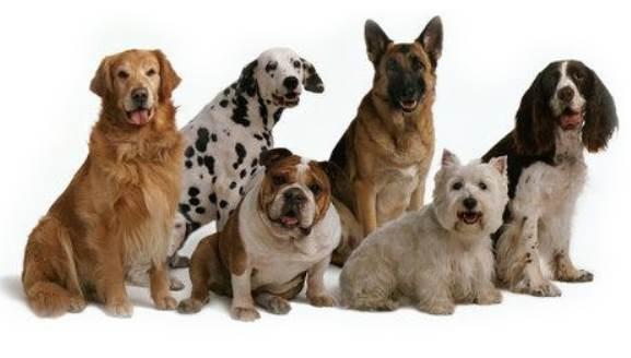5 consejos si tienes que viajar con tu perro
