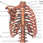 cirugía de torax