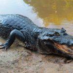 Animales de la selva: Las 8 especies más peligrosas