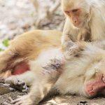Animales sueltos: Descubre 6 soluciones para terminar con este problema