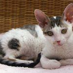 Gatos: 4 cosas que debes saber antes de tener uno