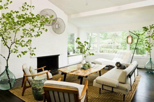 Tener plantas en el hogar