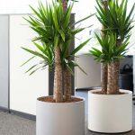 Tener plantas en el hogar: 7 motivos por las que son 100% necesarias