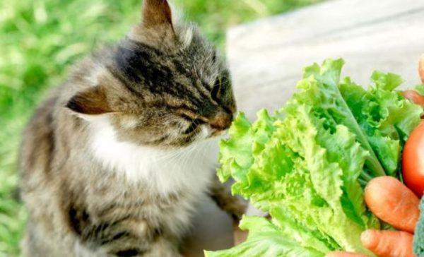 Razas de gatos: Conoce las 5 razas que nadie recomienda tener