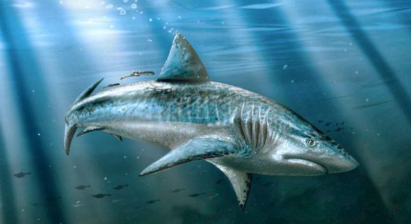 Tiburones gigantes: Las 6 especies más peligrosas